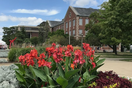 The quad with red iris flowers.